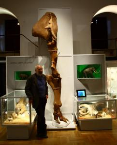 Kończyna przednia słonia leśnego (Palaeoloxodon antiquus) ul. Leszno Warszawa