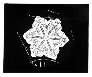 8. Śnieżynka z kolekcji A.B. Dobrowolskiego ze zbiorów PAN Muzeum Ziemi w Warszawie