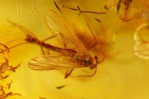 9.Diptera, Chironomidae. Fot. Aleksander Chmiel