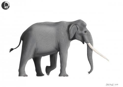 Plejstoceński słoń leśny (Palaeoloxodon antiquus) – rekonstrukcja artystyczna wyglądu zwierzęcia.Ryc. Michał Loba, PAN Muzeum Ziemi w Warszawie.