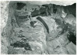 Kości słonia leśnego odsłonięte w wykopie