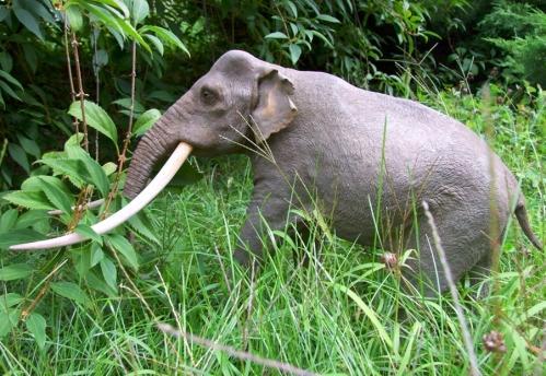 Model słonia leśnego wykonany przez Martę Szubert Fot. D. Nast
