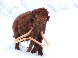 Rekonstrukcja mamuta włochatego